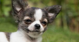犬を家族として迎えるために、飼い主さんが準備したい4つの事。