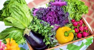 初心者でも簡単・安心! とっても育てやすい野菜TOP10