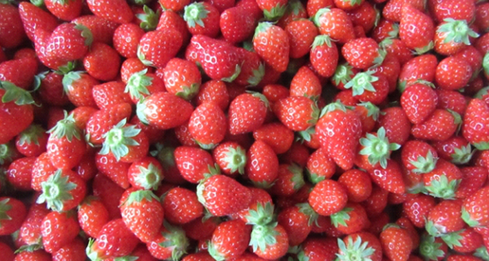 家庭菜園でイチゴは意外に簡単!? 育て方をご紹介