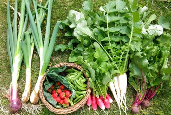 初心者の方必見! 家庭菜園の人気野菜ランキング5のまとめ