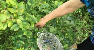 初心者必見。ベランダでもOK!簡単にできる果物5選・育て方のポイントをご紹介。