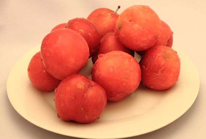初めての家庭果樹に最適「プラム(スモモ)」