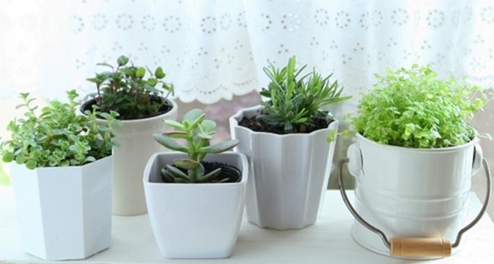 観葉植物が枯れる原因と対処法、正しい育て方をご紹介