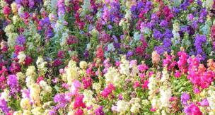初心者でも安心・液体肥料を使いこなしてガーデニング、家庭菜園をより楽しく!