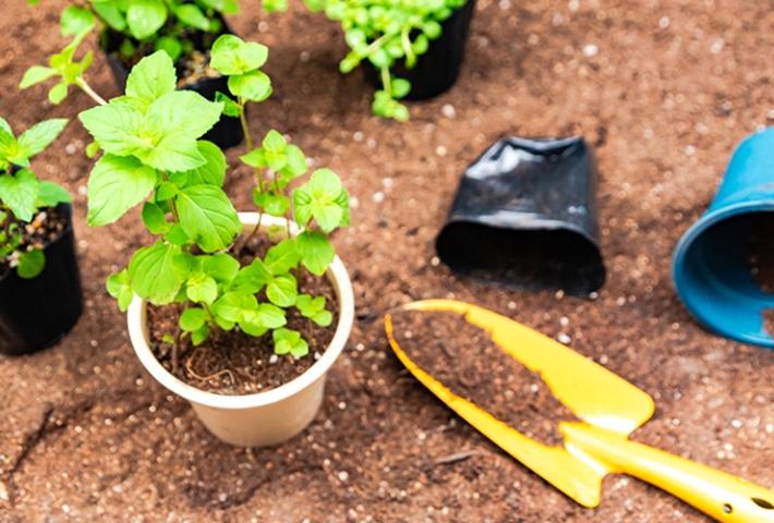 そもそも、肥料は家庭菜園に必要なの?