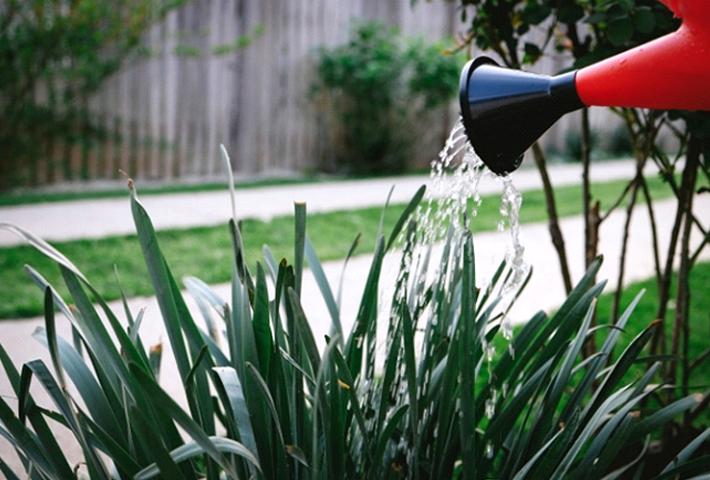 初心者でも安心・液体肥料を使いこなしてガーデニング、家庭菜園をより楽しく!のまとめ
