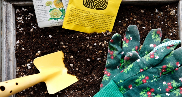ガーデニングの植物たちが全滅!そんな時にも役に立つ、便利な液体肥料のご紹介