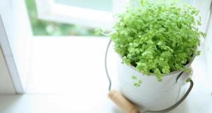 観葉植物のおすすめの栄養剤と使い方をご紹介