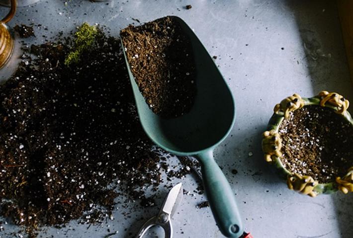 観葉植物に栄養剤を使う際の注意点