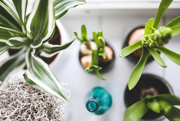 観葉植物の栄養剤の使い方