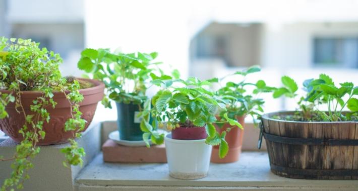 観葉植物の正しい肥料の与え方をご紹介。