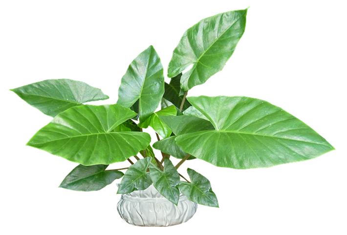 有機質肥料及び科学肥料の特徴