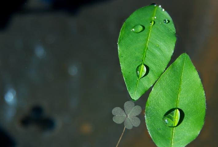 観葉植物に施肥する場合の注意点
