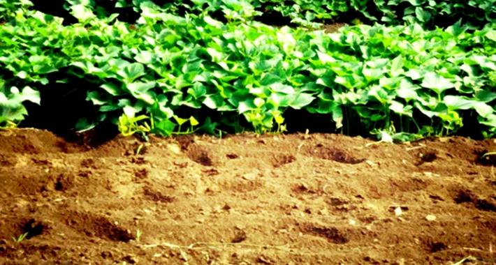 ガーデニングや家庭菜園の初心者必見! 土の条件とは? 基本の土作りの方法とは?
