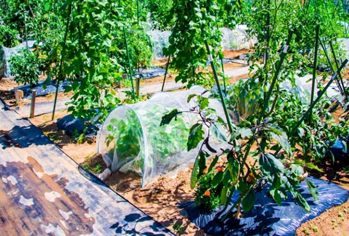 ガーデニングや家庭菜園の土の必要条件とは?