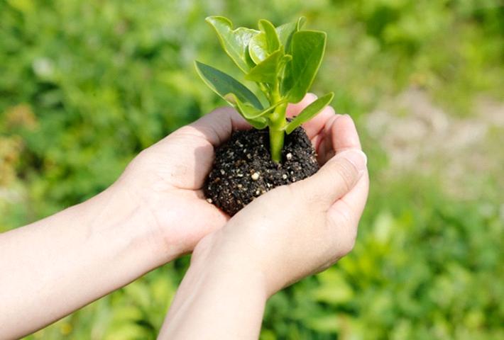 ガーデニングや家庭菜園の土の必要条件とは?のまとめ