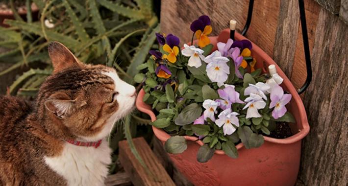 寄せ植え花壇を作ろう! 自分だけの花壇の作り方とメンテナンス方法