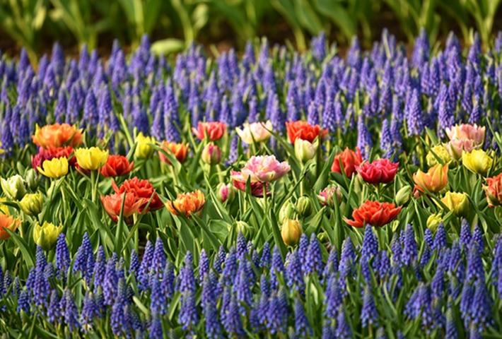 寄せ植え花壇の作り方の基本
