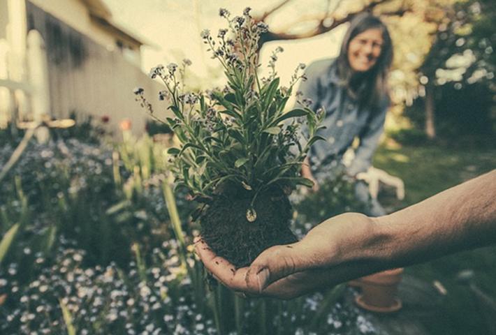 寄せ植え花壇のメンテナンス方法