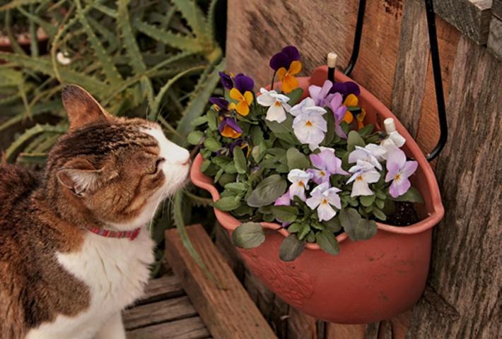 寄せ植え花壇を作ろう! 自分だけの花壇の作り方とメンテナンス方法のまとめ
