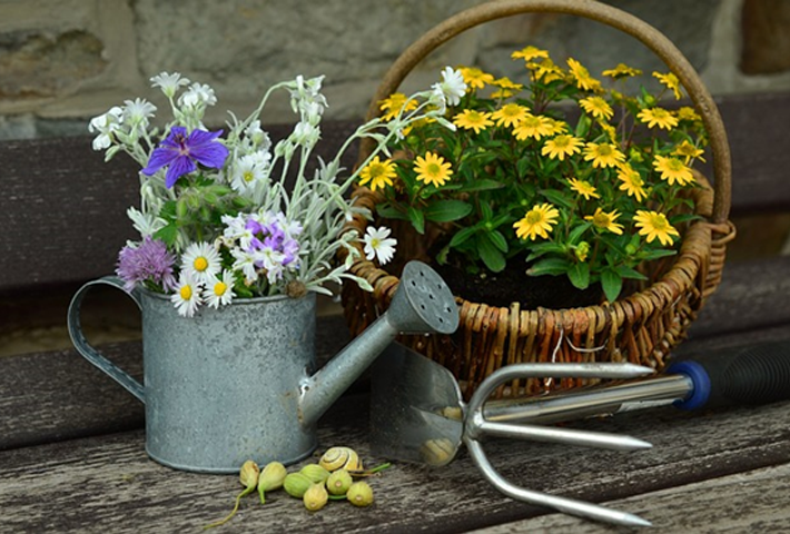 ガーデニング初心者でも育てやすい植物