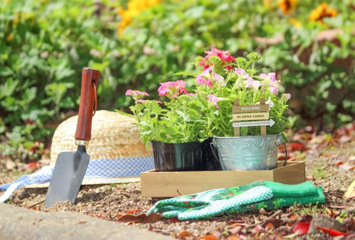 花の植え込み後のメンテナンス方法