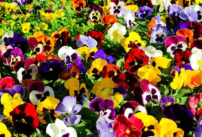 初心者でもできる基本的な花の育て方
