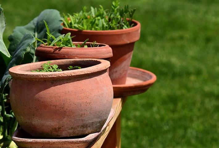 プランターで植物を育てる際の注意点