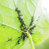 お庭・ガーデニングに発生する害虫とは