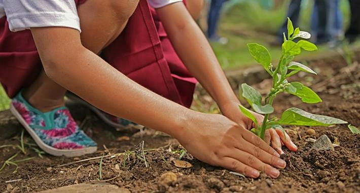 お庭・ガーデニングの害虫の防除