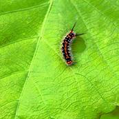 お庭・ガーデニングの害虫駆除