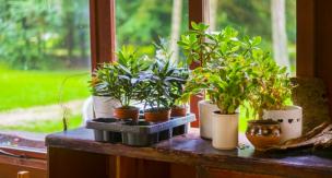 観葉植物に発生する虫、どうにかしたい!嫌な害虫とその対策をご紹介