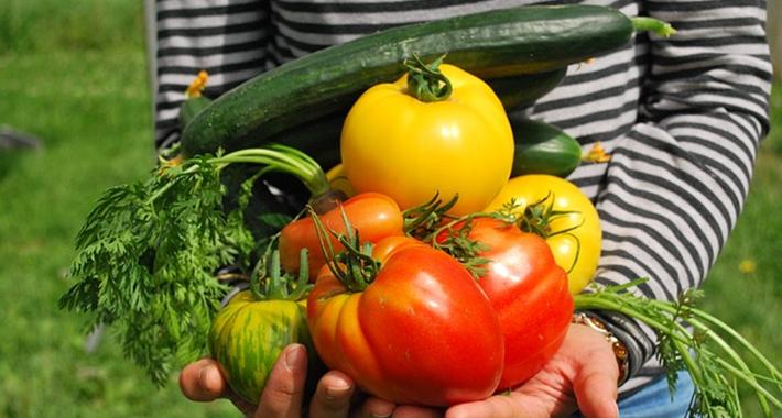 家庭菜園の害虫・病気が発生する原因・対策をご紹介。