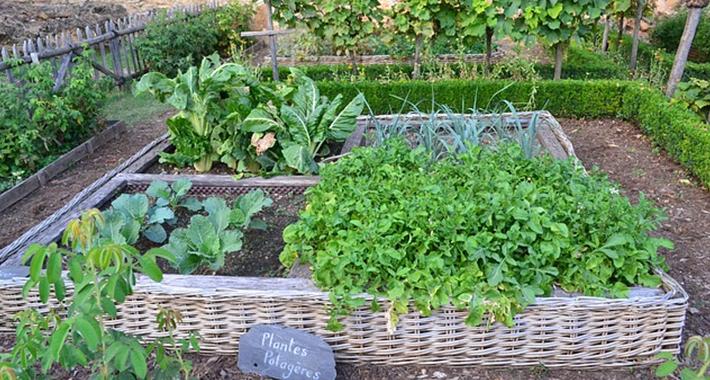 家庭菜園の環境・病気や害虫への対策