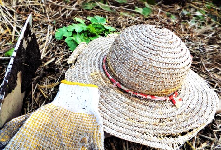 家庭菜園の天敵、雑草対策をご紹介のまとめ