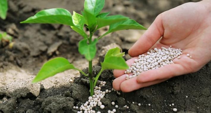 野菜の病気対策:肥料のやり方