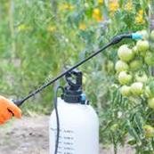 野菜の病気の種類の見分け方と治療法