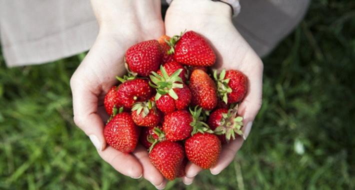 プランターでも果物を育てることができる? 育て方をご紹介。