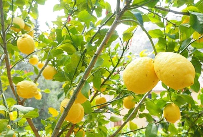 プランターでも育てられる果物と育て方