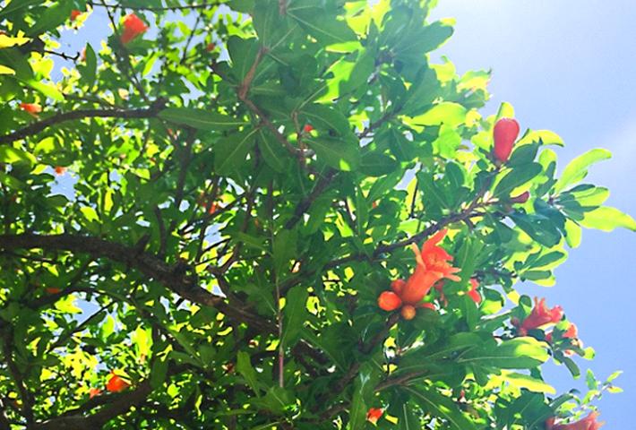家庭菜園でも美味しい果物が作れる! 植え方・育て方のコツのまとめ