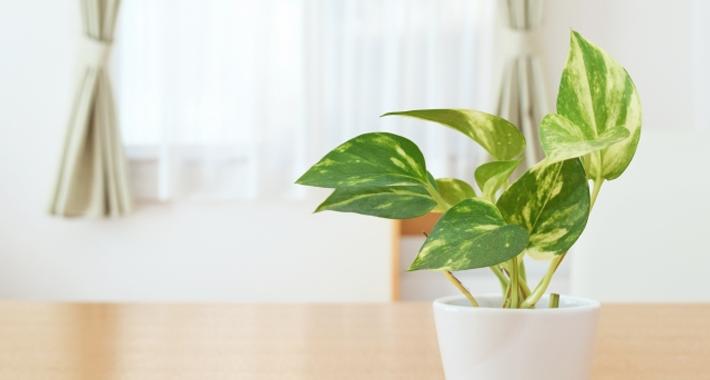 人気があって育てやすい!初心者必見・おすすめの観葉植物をご紹介