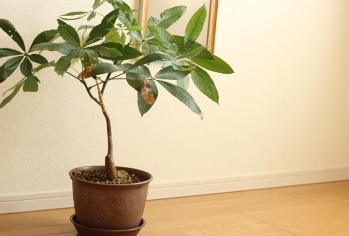 観葉植物の良くあるトラブル