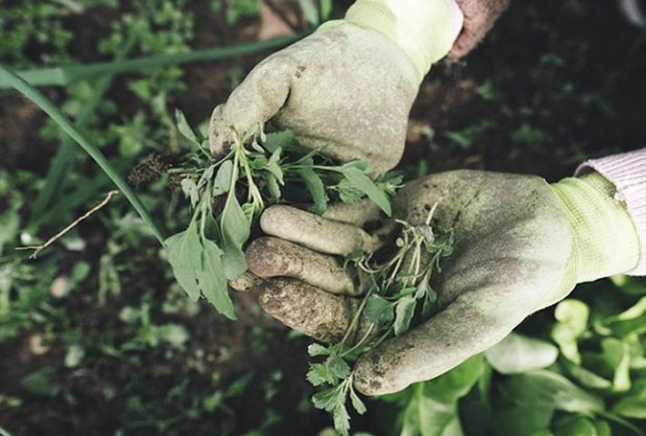 ガーデニングの雑草対策をご紹介
