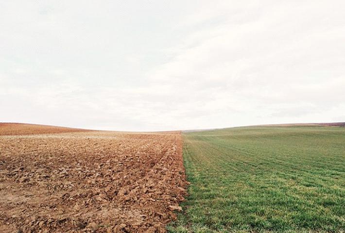 雑草対策に新しい味方!おすすめの土とは