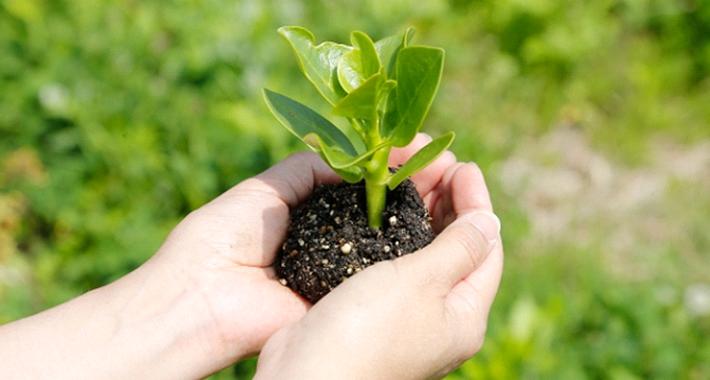 種まきと苗の植え付けの違いとは? ガーデニングの基礎知識を解説