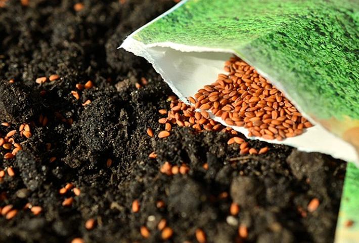 種から植物を育てる方法の基礎知識
