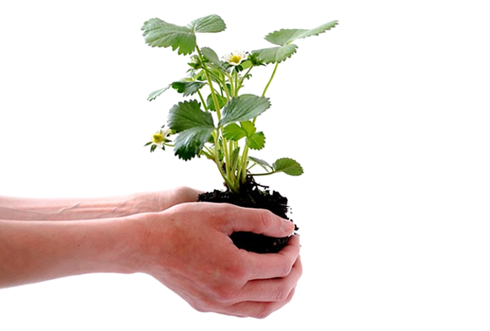 苗を植え付けて育てる方法の基礎知識