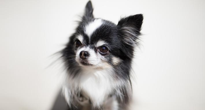犬にも食物アレルギー?! 愛犬の食事の注意点をご紹介