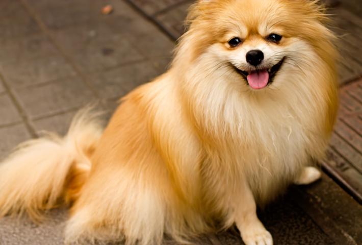 愛犬のアレルギーの調査方法!費用は?