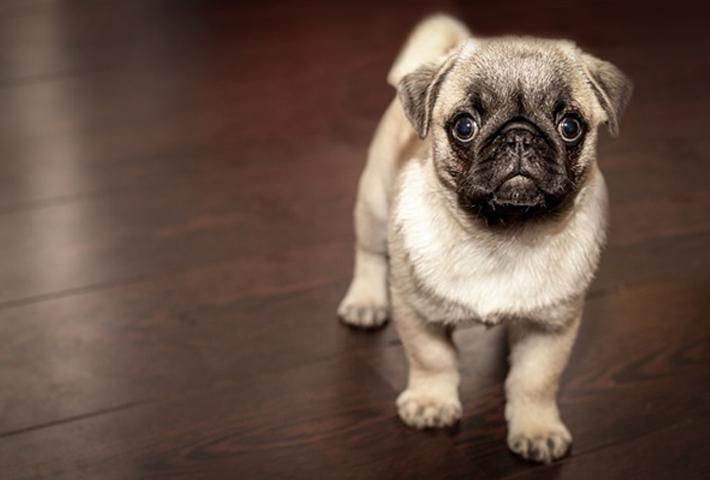 犬にも食物アレルギー?! 愛犬の食事の注意点をご紹介のまとめ